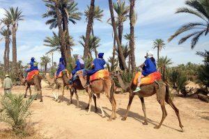 Camel, donkey & horse rides